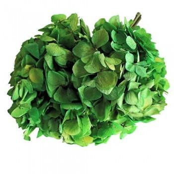 Preserved Flowers - Lime Green Hydrangea Head