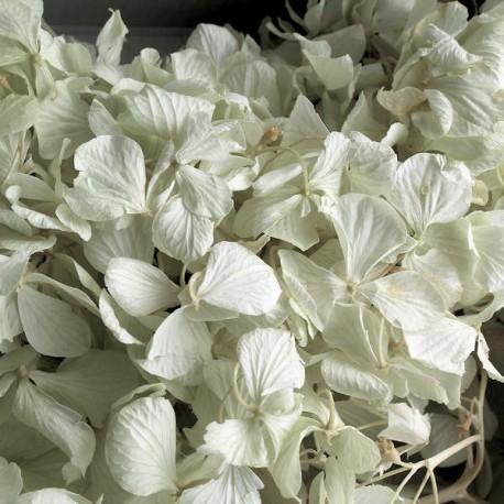 Preserved Flowers - Mint Green Hydrangea in a box