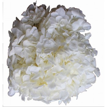 Preserved Flower Head - White Premium Hydrangea Heads