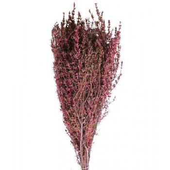 Preserved Foliage - Grabia Pink