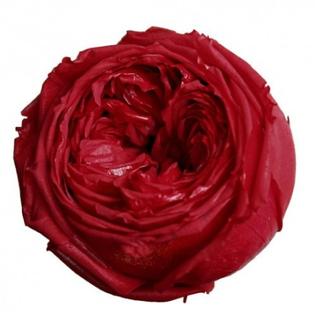 Preserved Red Garden Rose - 6 heads per box