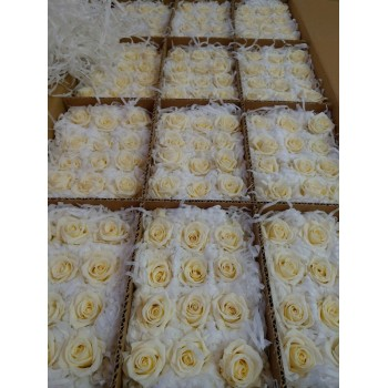 Mini Champagne rose heads - Bulk