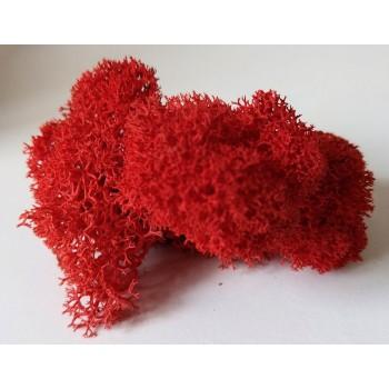 Reindeer Moss Red
