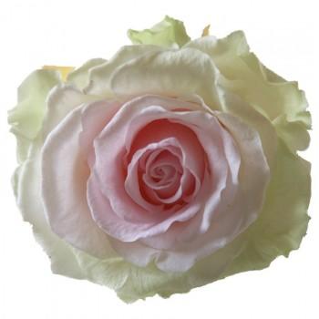 Tri colour Rose Heads
