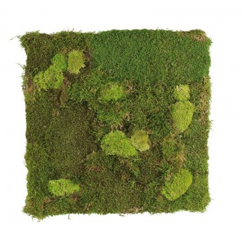 Bun and Flat moss wall panels