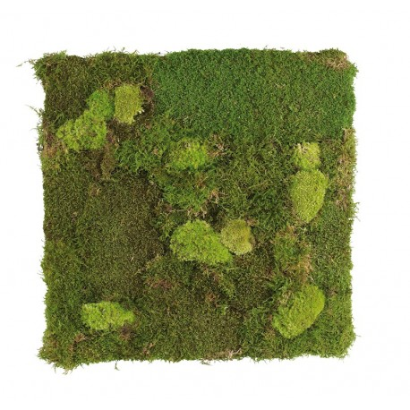 Bun and Flat moss wall panels
