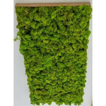 Green Reindeer Moss picture