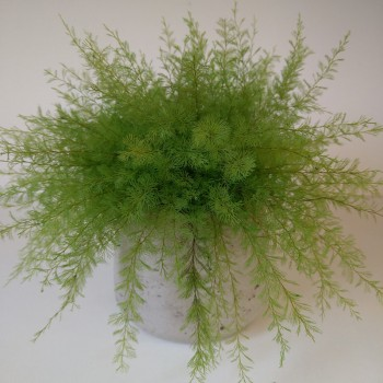 Air Fern, light green, standard, 3 bunches