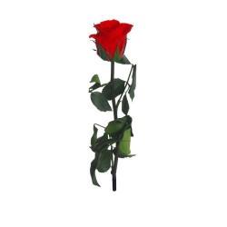Red Mini Amorosa Roses (Bag), 25