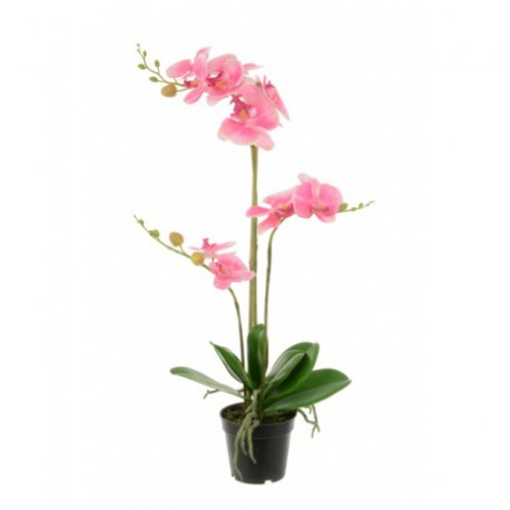 Phalaenopsis, single stem, 53cm