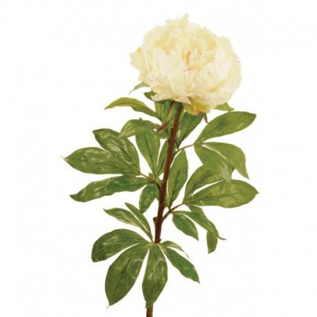 Large Peony, cream, x 4 stems