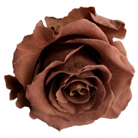 Mocha Rose Heads