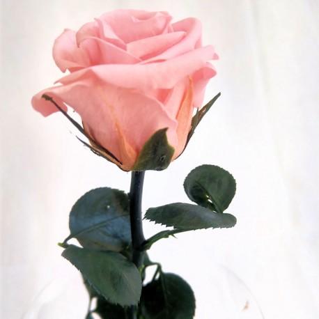 Pastel pink mini Amorosa, bulk case of 25