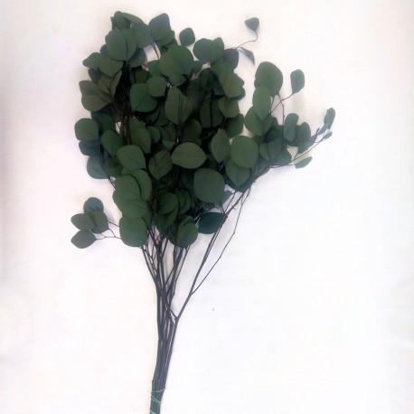 Preserved Grey Green Populus Foliage