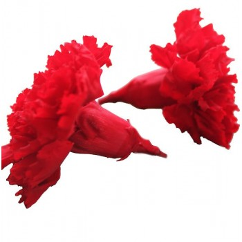 Red Carnation Heads
