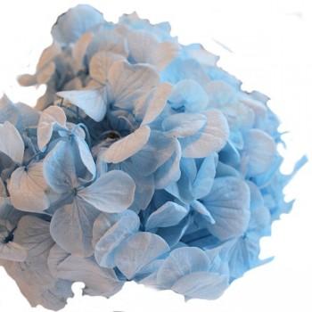 Pastel Blue Premium Hydrangea Heads