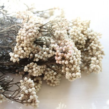 White (Natural) Rice Flower