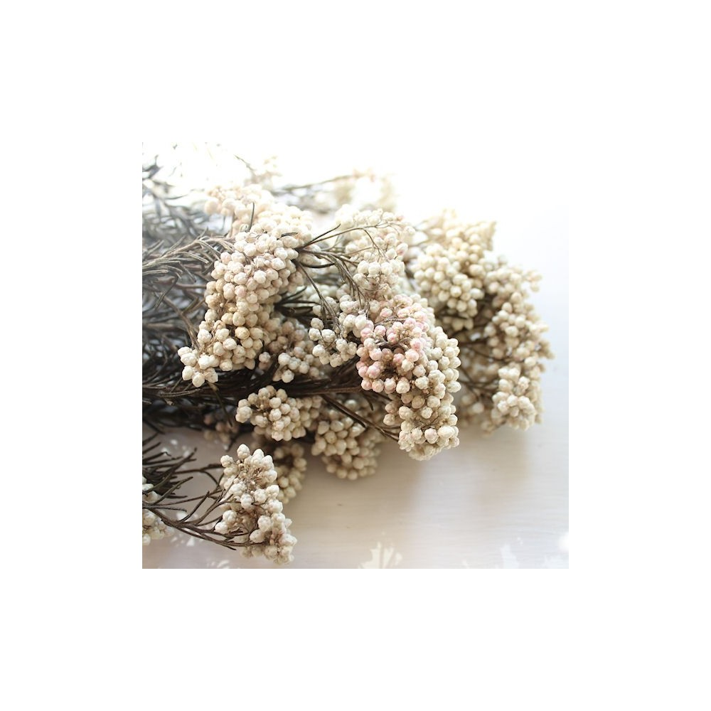 Floristry Wholesale Supplies