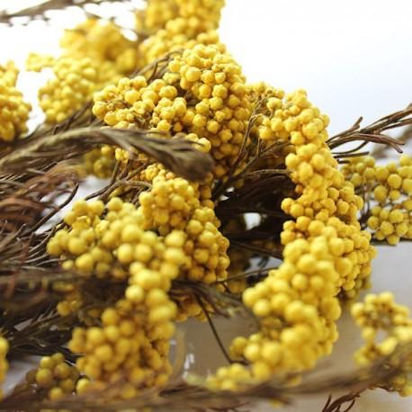 Lemon Rice Flower