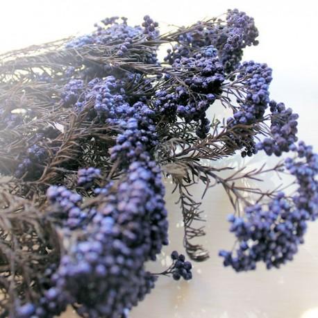 Blue Rice Flower