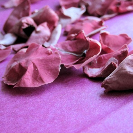 Mini Cranberry Rose Petals - 1 Litre
