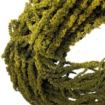 Amaranthus Almond Green 40/70cm
