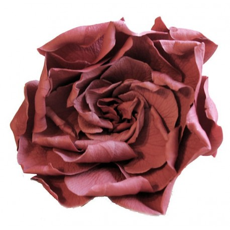 Preserved Flowers - Gardenia Heads in a Vintage Cranberry Colour