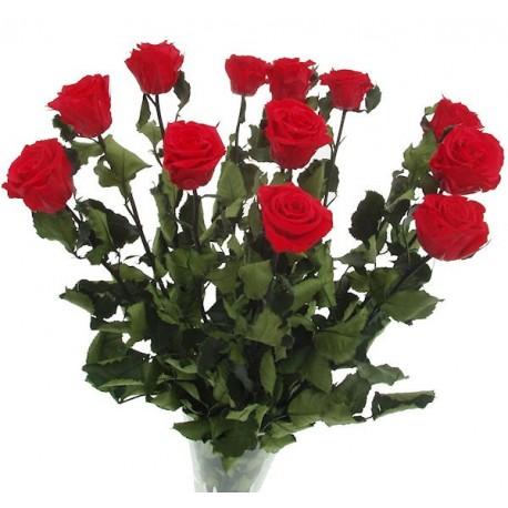 Simple Red Amorosa Rose Arrangement