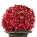 Preserved Hydrangeas